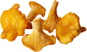 Girolles en version deshydratee